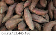 Raw sweet potato in box on farmers market. Стоковое видео, видеограф Яков Филимонов / Фотобанк Лори