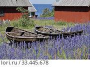 Купить «Nyhamn, Gotland, Sweden.», фото № 33445678, снято 17 июня 2019 г. (c) age Fotostock / Фотобанк Лори