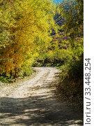 Dirt road in a mountainous woodland. Chulyshman Valley, Ulagansky District, Altai Republic, Russia. Стоковое фото, фотограф Вадим Орлов / Фотобанк Лори