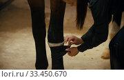 Купить «Riding a horse - woman rider putting leggings on her horse», видеоролик № 33450670, снято 4 июня 2020 г. (c) Константин Шишкин / Фотобанк Лори