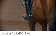 Купить «Hippodrome - a woman rider on the back of a horse walking around the hippodrome», видеоролик № 33451170, снято 4 июня 2020 г. (c) Константин Шишкин / Фотобанк Лори