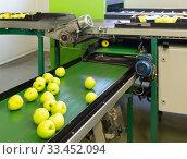 Купить «View of ripe apples on conveyor belt of sorting production line», фото № 33452094, снято 3 апреля 2020 г. (c) Яков Филимонов / Фотобанк Лори