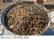 Купить «Мёртвые пчёлы после зимовки. Пчелиный подмор. Варроатоз. Colony collapse disorder: dead bees after wintering. Varroosis.», фото № 33452362, снято 29 марта 2020 г. (c) Евгений Романов / Фотобанк Лори