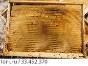Купить «Пустые пчелиные соты. Empty honeycombs on the ground.», фото № 33452370, снято 29 марта 2020 г. (c) Евгений Романов / Фотобанк Лори