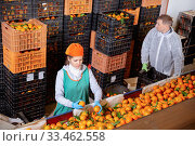 Focused man and woman working on tangerines sorting line in fruit warehouse. Стоковое фото, фотограф Яков Филимонов / Фотобанк Лори