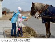 Молодая женщина с маленькой дочерью кормят лошадь сеном на открытом воздухе. Калининградская область. Стоковое фото, фотограф Ирина Борсученко / Фотобанк Лори