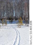 Купить «Лыжня в лес накануне весны», эксклюзивное фото № 33469698, снято 22 марта 2020 г. (c) Анатолий Матвейчук / Фотобанк Лори