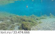 Купить «Озеро с голубой водой, рыбы. Подводная съемка», видеоролик № 33474666, снято 29 сентября 2014 г. (c) Mikhail Erguine / Фотобанк Лори