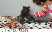 Купить «Темно серый пушистый кот смешно сидит на кровати, девушка подошла и начала его гладить», видеоролик № 33475058, снято 30 марта 2020 г. (c) Иванов Алексей / Фотобанк Лори