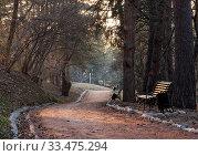 Освещенная закатным солнцем деревянная скамья в Кисловодском курортном парке. Весна, март (2020 год). Стоковое фото, фотограф Наталья Николаева / Фотобанк Лори