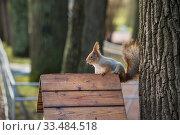 Купить «Рыжая белка ест орех в парку», фото № 33484518, снято 2 января 2020 г. (c) Литвяк Игорь / Фотобанк Лори