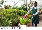 Купить «Flower vendor carrying cart with plants in pots», фото № 33487414, снято 22 мая 2019 г. (c) Яков Филимонов / Фотобанк Лори