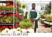 Купить «Flower seller carrying trolley with plants», фото № 33487418, снято 22 мая 2019 г. (c) Яков Филимонов / Фотобанк Лори