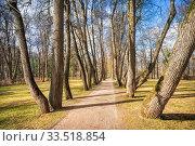 Липовая аллея в Остафьево Linden alley in Ostafyevo. Стоковое фото, фотограф Baturina Yuliya / Фотобанк Лори