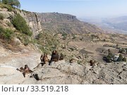 View into valley and Gelada baboon (Theropithecus gelada) group of females with young and a male. Near cliff where Baboons spend the night. Debre Libanos, Rift Valley, Ethiopia. 2017. Стоковое фото, фотограф Sylvain Cordier / Nature Picture Library / Фотобанк Лори