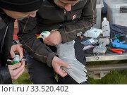 Купить «Scientists with a Kittiwake (Rissa tridactyla). Staff from Natturustofa Noroausturlands (Northeast Iceland Nature Research Centre) catch seabirds at Skoruvikurbjarg...», фото № 33520402, снято 2 июня 2020 г. (c) Nature Picture Library / Фотобанк Лори