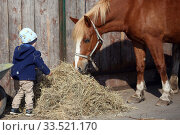 Dierhagen, infant stands in front of a horse (2018 год). Редакционное фото, агентство Caro Photoagency / Фотобанк Лори
