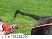 Купить «Hamburg, trotting horse with bare tail», фото № 33522050, снято 29 июня 2018 г. (c) Caro Photoagency / Фотобанк Лори