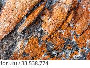 Купить «Orange lichens on the gray stone. The indicator of the purity of the environmental situation», фото № 33538774, снято 17 марта 2019 г. (c) Наталья Волкова / Фотобанк Лори