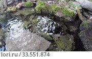 Купить «Lake, forest, reflection, water, trees», видеоролик № 33551874, снято 13 апреля 2020 г. (c) Mikhail Erguine / Фотобанк Лори
