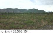 Заболоченная тайга с редкими деревьями на фоне сопок. Весна. Стоковое видео, видеограф Олег Хархан / Фотобанк Лори