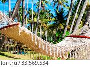 Купить «Hammock between two palm trees on the beach. Pineapple island, Vietnam», фото № 33569534, снято 8 июля 2020 г. (c) easy Fotostock / Фотобанк Лори