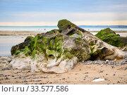 Купить «Stone with moss after the ebb of the ocean», фото № 33577586, снято 26 октября 2019 г. (c) Ирина Аринина / Фотобанк Лори