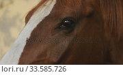 Close view of a Dressage Horse. Стоковое видео, агентство Wavebreak Media / Фотобанк Лори