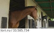Купить «View of Dressage horses looking through their stables», видеоролик № 33585734, снято 27 сентября 2019 г. (c) Wavebreak Media / Фотобанк Лори