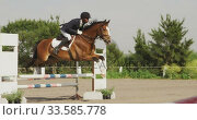 African American man jumping an obstacle with his Dressage horse. Стоковое видео, агентство Wavebreak Media / Фотобанк Лори