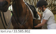 Купить «Caucasian woman preparing the dressage horse», видеоролик № 33585802, снято 27 сентября 2019 г. (c) Wavebreak Media / Фотобанк Лори