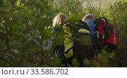 Active senior couple hiking in forest. Стоковое видео, агентство Wavebreak Media / Фотобанк Лори