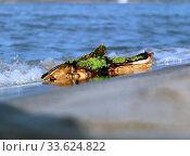 Ein Ruhepol im regelmäßigen Auf und Ab der Gezeiten. Стоковое фото, фотограф Zoonar.com/heju / age Fotostock / Фотобанк Лори