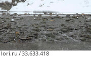 Купить «Stones on a river under heavy snow in winter season. Altai, Blue Lakes, Siberia, Russia», видеоролик № 33633418, снято 7 марта 2020 г. (c) Serg Zastavkin / Фотобанк Лори