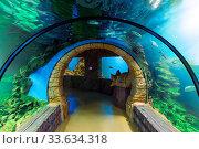 Купить «Подводный тоннель в океанариуме. Аквариум с тропическими рыбами», фото № 33634318, снято 21 декабря 2019 г. (c) Евгений Ткачёв / Фотобанк Лори