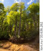 Купить «Hilltop forest views», фото № 33636262, снято 5 февраля 2017 г. (c) Яков Филимонов / Фотобанк Лори