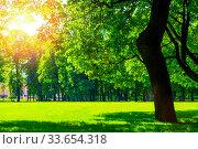 Купить «Summer sunny park landscape. Summer city park with deciduous green trees», фото № 33654318, снято 6 июня 2019 г. (c) Зезелина Марина / Фотобанк Лори