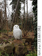 Купить «Berlin, Germany, Snowy owl», фото № 33661082, снято 14 февраля 2020 г. (c) Caro Photoagency / Фотобанк Лори