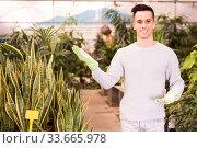 Купить «Young gardener caring for flowers in orangery», фото № 33665978, снято 8 ноября 2019 г. (c) Яков Филимонов / Фотобанк Лори