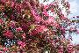Купить «Blooming apple tree with pink flowers on a sunny spring day», фото № 33681078, снято 22 мая 2017 г. (c) Наталья Волкова / Фотобанк Лори