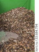 Купить «Pile of dead leaves in green wooden composting bin, Quebec, Canada.», фото № 33684794, снято 11 мая 2019 г. (c) age Fotostock / Фотобанк Лори