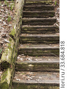 Купить «Decayimg wooden stairs covered with Quercus - Oak tree leaves, green Bryophyta - Moss and lichen growth, Quebec, Canada.», фото № 33684818, снято 11 мая 2019 г. (c) age Fotostock / Фотобанк Лори