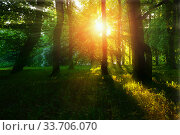 Купить «Forest summer landscape - forest trees with grass on the foreground and sunlight shining through the summer forest trees», фото № 33706070, снято 26 мая 2018 г. (c) Зезелина Марина / Фотобанк Лори