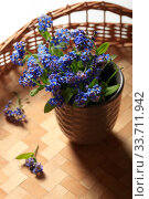 Bouquet of blue forget-me-not flowers on a wicker table. Стоковое фото, фотограф Яна Королёва / Фотобанк Лори
