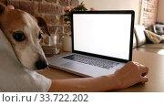 Купить «Anonymous woman with cute dog sitting and table and working on remote project on laptop with blank screen at home», видеоролик № 33722202, снято 7 мая 2020 г. (c) Ekaterina Demidova / Фотобанк Лори