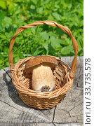 Купить «Белый гриб (лат. Boletus edulis) в корзинке на пне», фото № 33735578, снято 28 июля 2019 г. (c) Елена Коромыслова / Фотобанк Лори