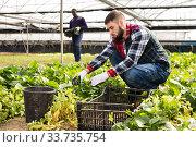 Купить «Two men controlling quality of plants», фото № 33735754, снято 29 октября 2019 г. (c) Яков Филимонов / Фотобанк Лори
