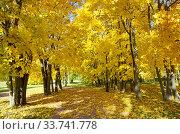 Купить «Пейзаж с желтыми кленами в осеннем парке», фото № 33741778, снято 12 октября 2018 г. (c) Елена Коромыслова / Фотобанк Лори