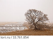 Купить «Prairie Landscape in Winter Saskatchewan Canada rural», фото № 33761854, снято 1 июня 2020 г. (c) age Fotostock / Фотобанк Лори