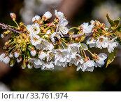 Купить «Da kann die Biene mehrfach tief eintauchen.», фото № 33761974, снято 31 мая 2020 г. (c) age Fotostock / Фотобанк Лори
